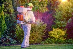 Need To Eliminate Pests? Try These Pest Control Tips