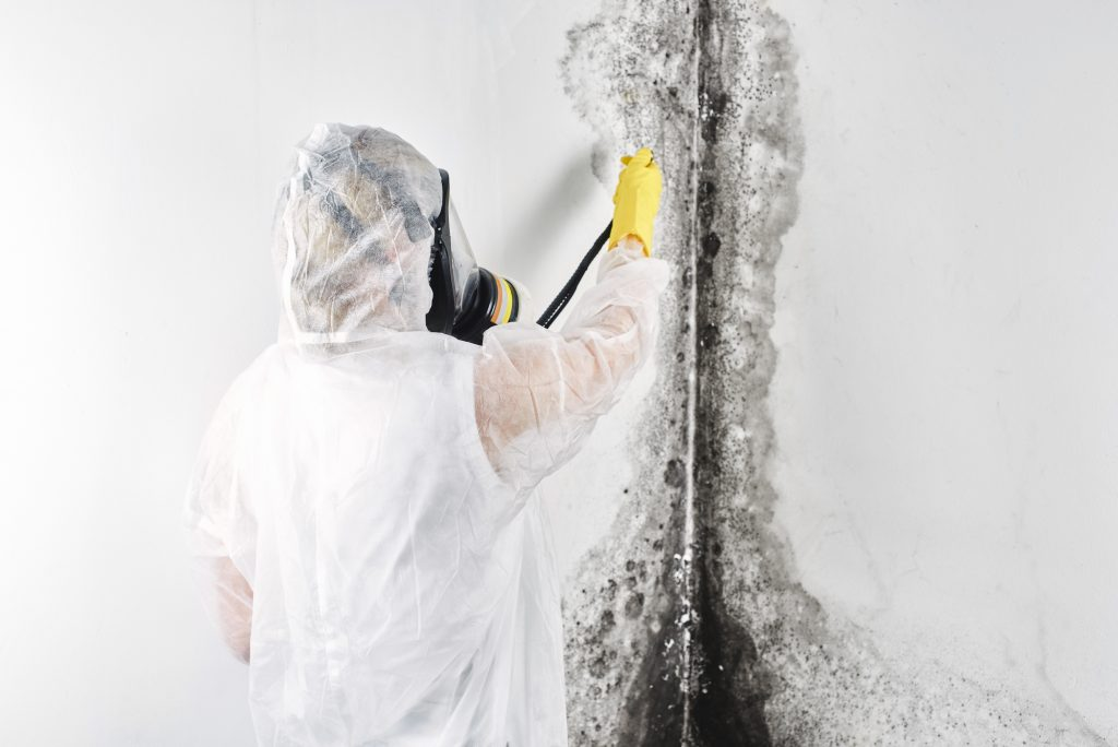 Mold Removing