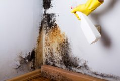 What Are The Main Benefits Of Hiring Mold Removing Service Company?